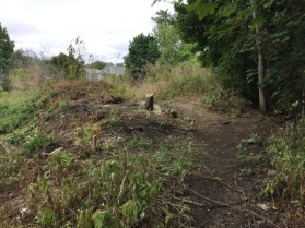 Small trees had to be removed before the area could be bulldozed