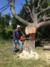 Several large dead or dying trees had to be removed for safety reasons