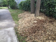 Thank you Agustine for getting this last step of the project started--spreading the wood chips (mulch) around the edges of the Parking Lot. Next person?